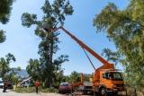 Αποψίλωση δένδρων κλάδεμα ψηλών υψηλών  δέντρων και με γερανό εντός Αττικής.