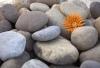 Βότσαλο River ποταμισιο  φυσικα βότσαλα ΠΕΡΙΓΡΑΦΗ Υλικό: φυσικά πετρώματα.  Επιφάνεια: στρογγυλοποιημένη αντίκ.   Διαστάσεις: 1,5-3cm, 3-5cm και 5-8cm περίπου.   Συσκευασία: Σακί 20kg ή Big Bag με ενδεικτικό βάρος 1400kg περίπου.  Χρήσεις: βοτσαλόστρωση σ